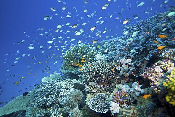 Australia S Great Barrier Reef Is Not Dead Yet Accuweather