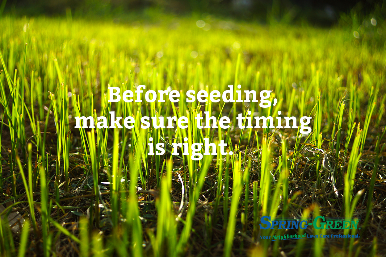 Plant Gr Seed This Spring