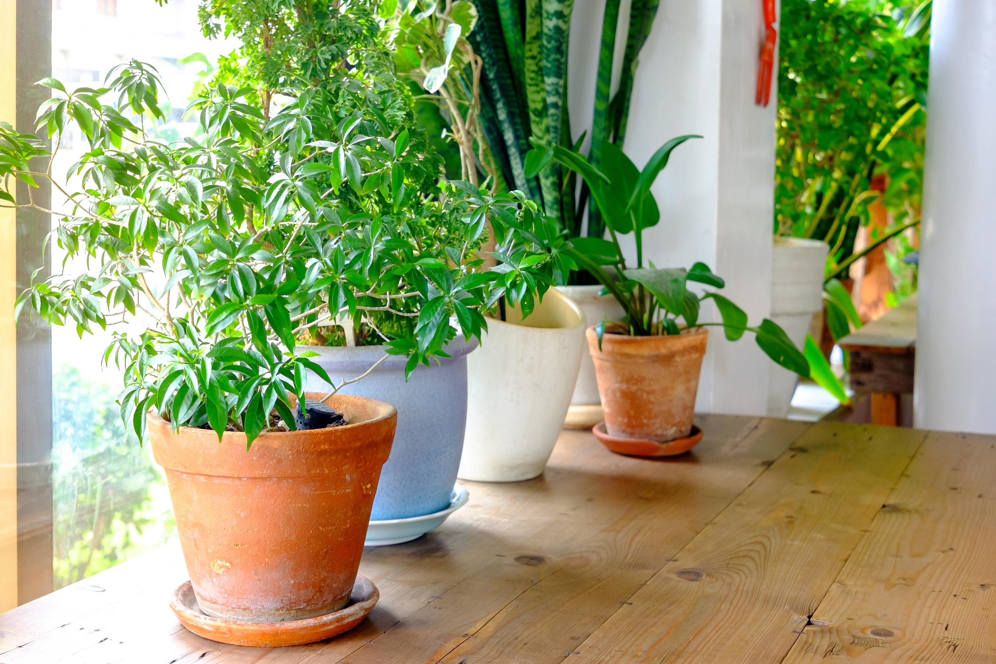 5 low-maintenance plants that can purify the air in your