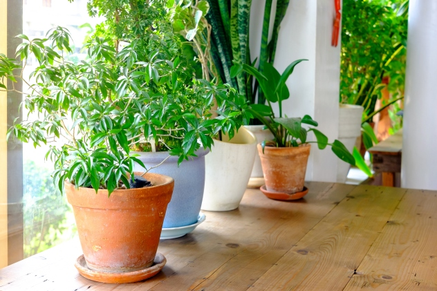 5 low-maintenance plants that can purify the air in your ... on best mulch for home, best trees for home, best solar system for home, best chairs for home, best pets for home, best fish for home, best dogs for home, best light for home, best flowers for home, best lighting for home, best lucky plant,