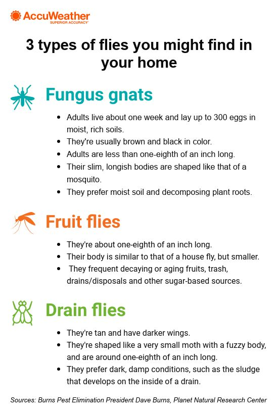 Are Annoying Gnats Fruit Flies Plaguing Your Home Banish Them With These Expert Tips Accuweather