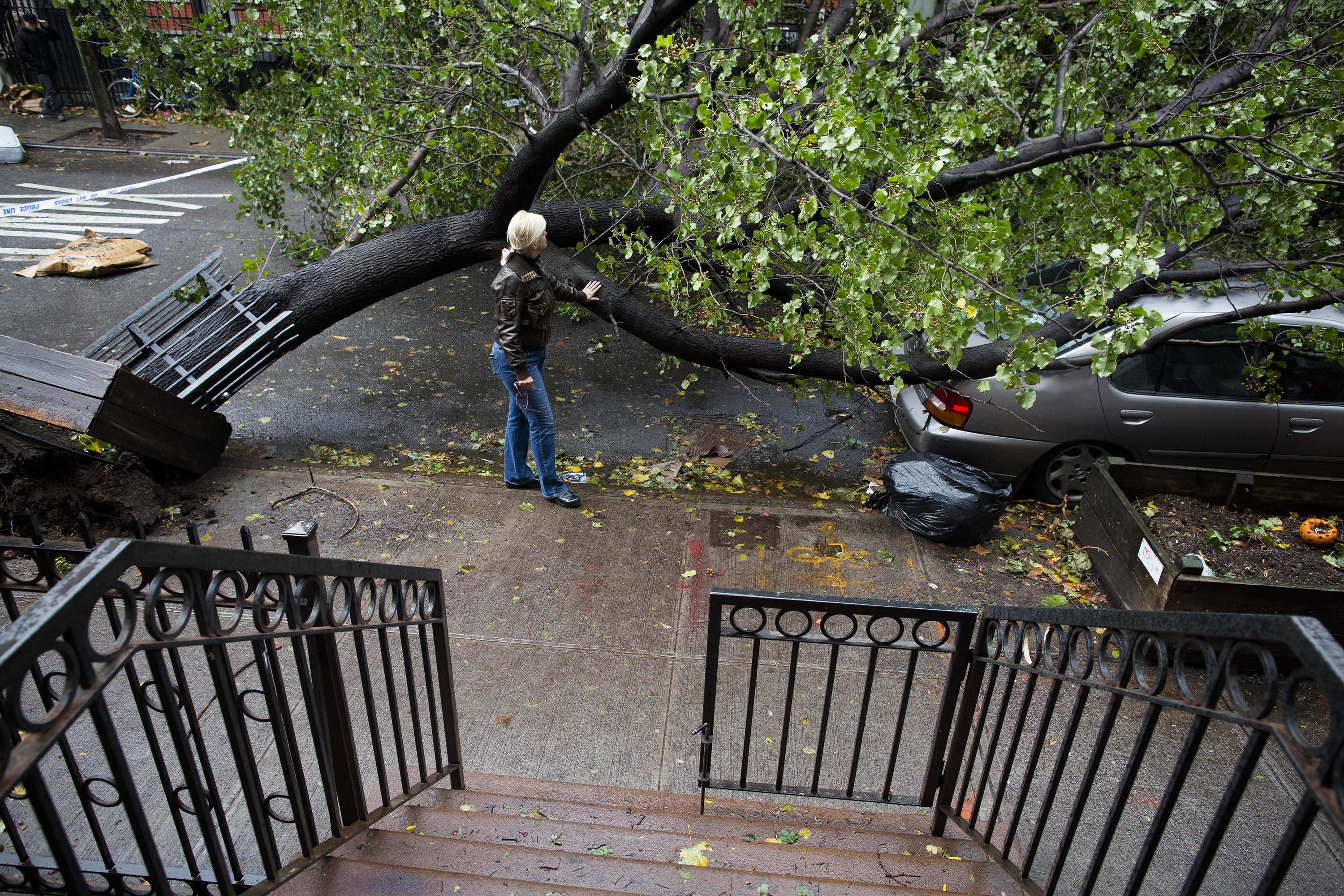 Why trees topple in high winds