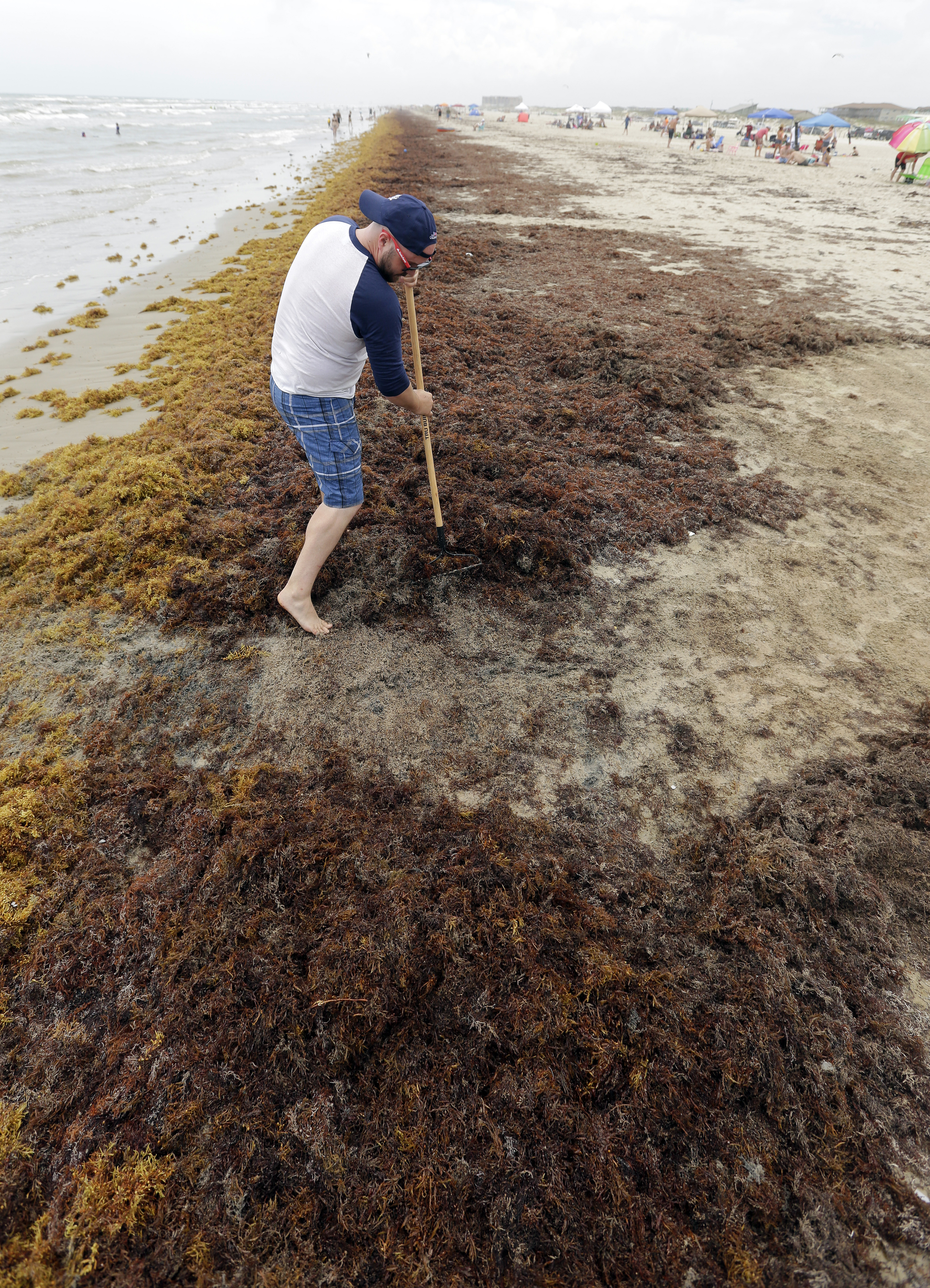 Mysterious Sargassum seaweed outbreaks threaten tourism