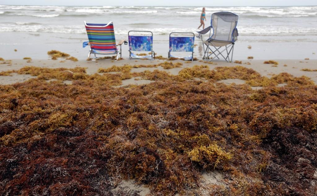 Mysterious Sargassum seaweed outbreaks threaten tourism
