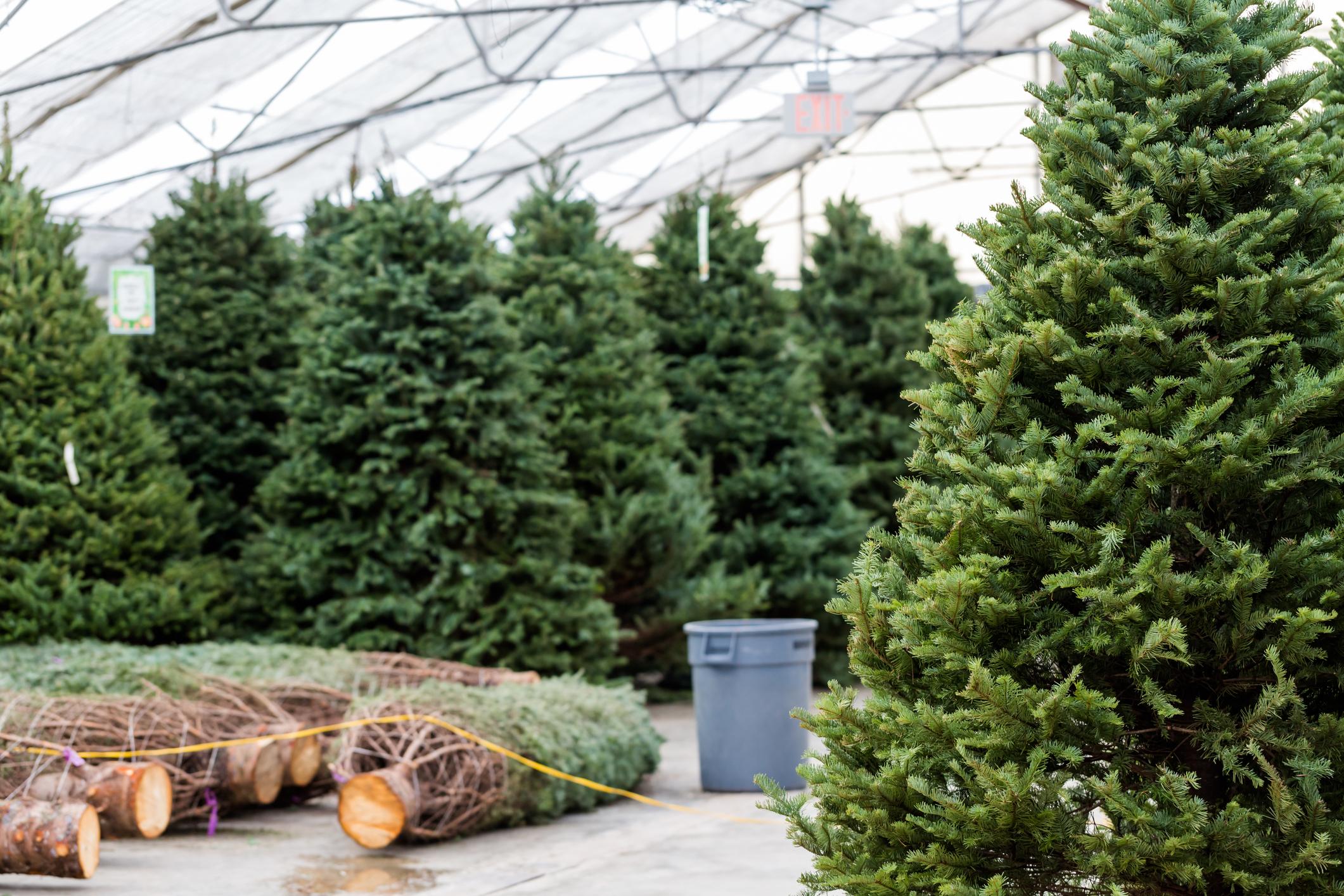 Fresh Christmas Trees.Holiday Hacks To Keep Your Real Christmas Tree Fresh All