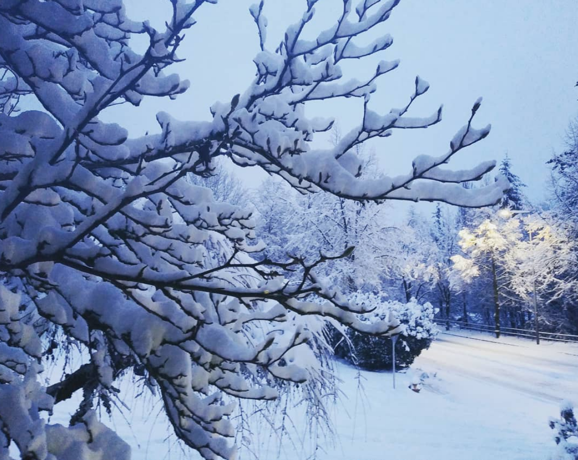 Photos: Heavy snow slams Washington and Oregon, triggering