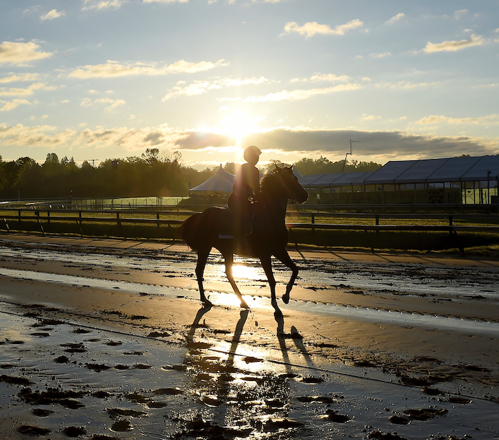 Sunny day forecast ahead of 144th Preakness Stakes, but pop