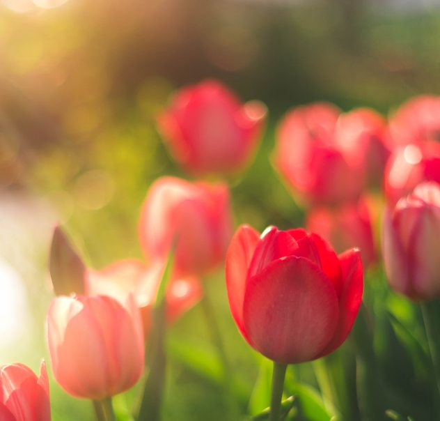 The 10 Best Spring Flowers To Plant At Home Accuweather